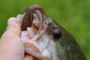特にテキサスで釣るケースが激増