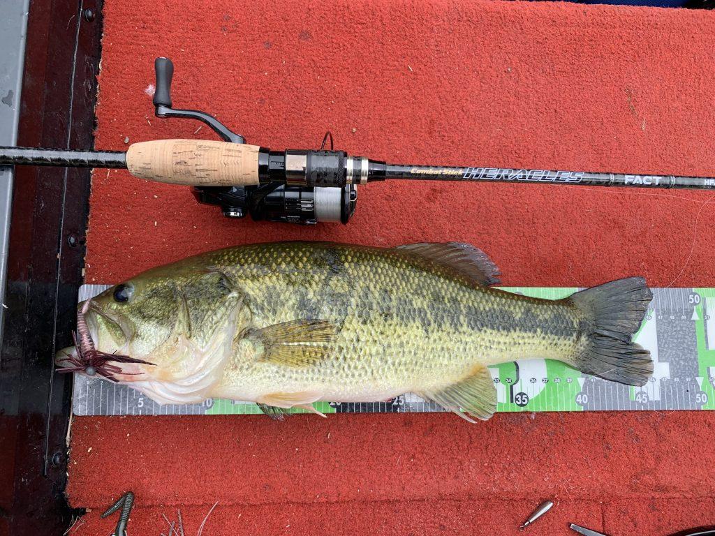 このぐらいの魚はたくさん釣りました